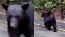 Hombre agrede a oso negro con gas lacrimógeno en Nuevo León