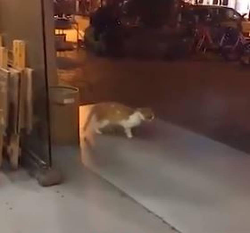 Video de un gato bailando 'Moonwalker' es la sensación en Twitter