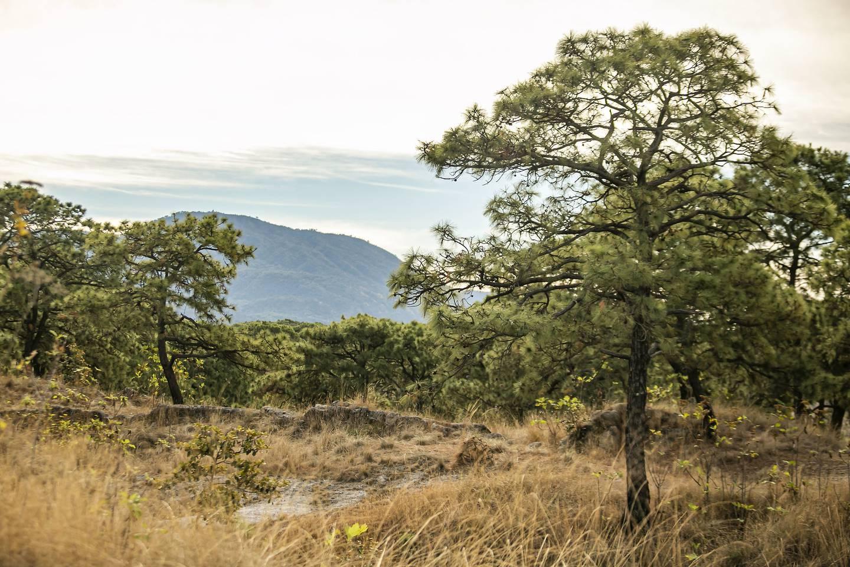 Advierten expertos que la recuperación ambiental de esta zona del bosque demorará años.